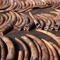 Piano Ue contro il traffico di animali selvatici
