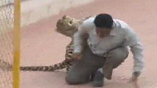 Paura nella scuola elementare leopardo all'attacco: tutti illesi