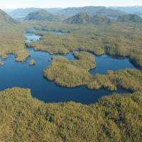 British Columbia, la Foresta del Grande Orso è salva: siglato storico accordo