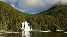 British Columbia, salva la Foresta del Grande Orso
