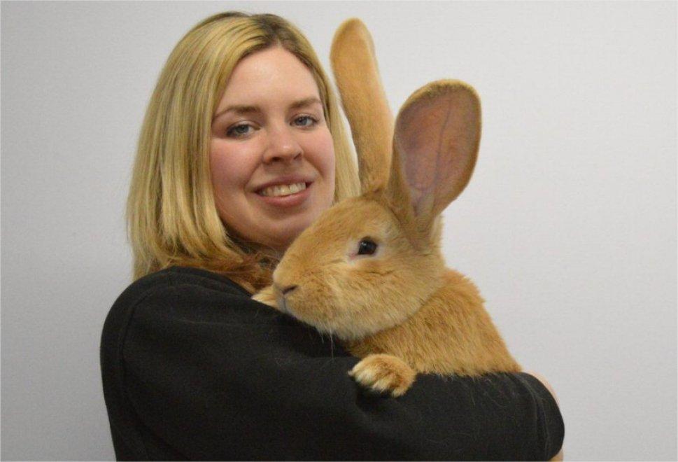 Scozia, il coniglio gigante è grande come un cane