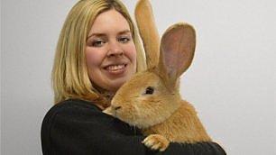 Il coniglio è grande come un cane L'adozione è un problema gigante
