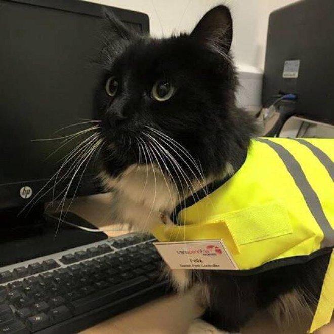 Gb, quando la caccia al topo premia: gatta arruolata nello staff della stazione