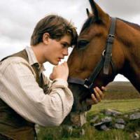 Empatico come un cavallo: sa leggere le emozioni sul volto di un uomo