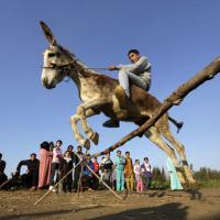 Il piccolo contadino e l'asino: insegna l'animale a saltare