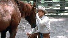 Empatico cavallo: sa leggere le emozioni sul volto di un uomo