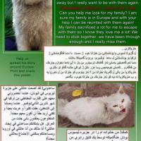 Dias, il gatto fuggito dall'Iraq: l'appello per aiutarlo a ricongiungersi con la sua famiglia