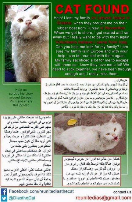 Dias, il gatto fuggito dall'Iraq: un appello per ritrovare la sua famiglia