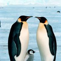 Animali, i rituali di corteggiamento