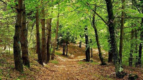 Bicipolitana e bosco sociale: le ricette dei comuni contro lo smog