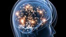 Mini cervelli umani per la ricerca scientifica