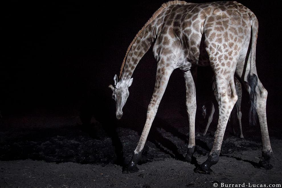 Trappole fotografiche: il mondo notturno degli animali selvatici