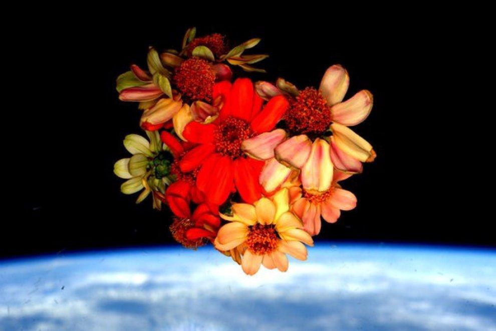 Iss, colto il primo mazzo di fiori spaziale