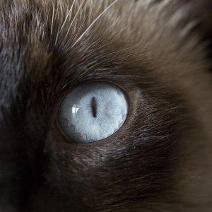 """""""Tu non sei il mio vero gatto!"""". Così la sindrome di Capgras inganna la nostra mente"""