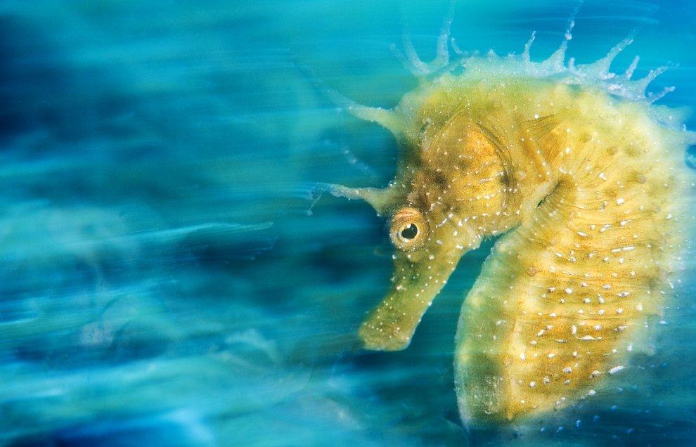 Pesci, fondali e relitti: la migliore fotografia subacquea è italiana
