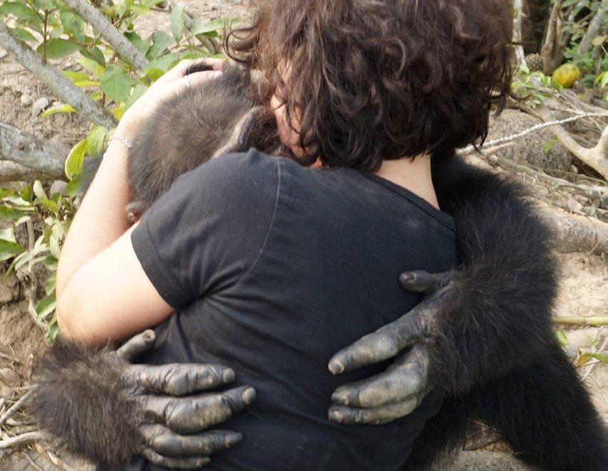L'abbraccio di Ponso, lo scimpanzè più solo del mondo