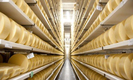 Usa, fiocchi di legno nel '100% Parmesan'. L'allarme della Food and Drug Administration