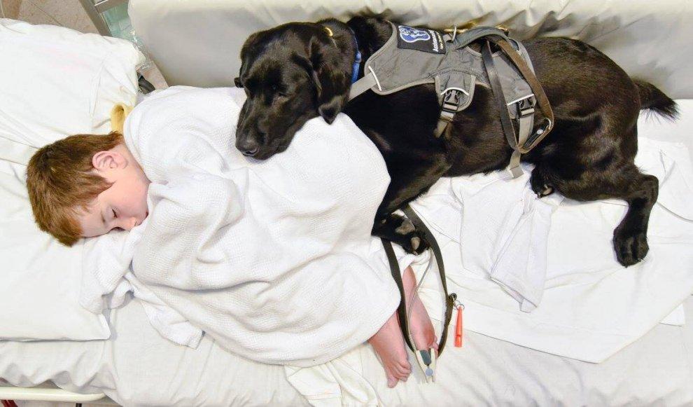 Il bimbo e il labrador sono inseparabili: insieme anche in ospedale