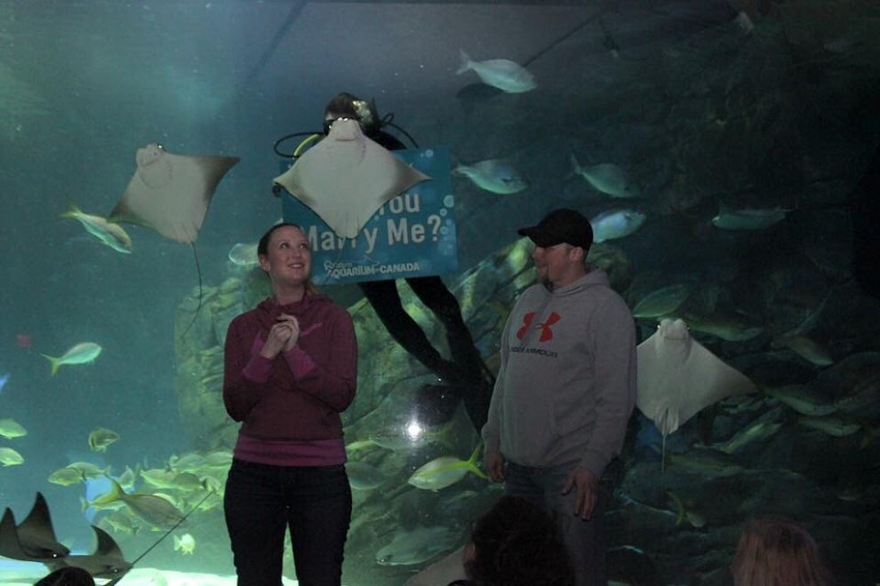 Photobombing all'acquario: la razza rovina la proposta di matrimonio