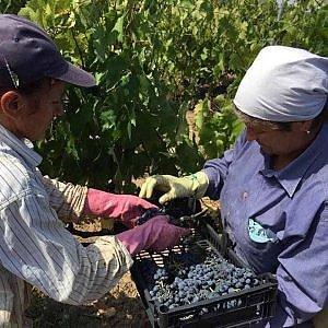 Il vino traina l'export alimentare: il 2015 anno record