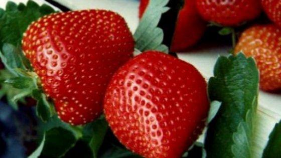Clima che cambia: dalle fragole agli asparagi, quante primizie in anticipo