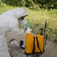 Zika: scienziati cinesi tracciano la sequenza del genoma del virus