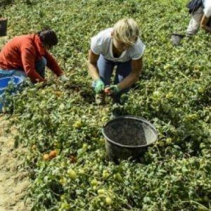 Caporalato, in 400mila lavorano nei campi per meno di 2,5 euro l'ora