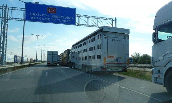 Quegli animali ammassati nei camion, portati a morire fuori dall'Europa
