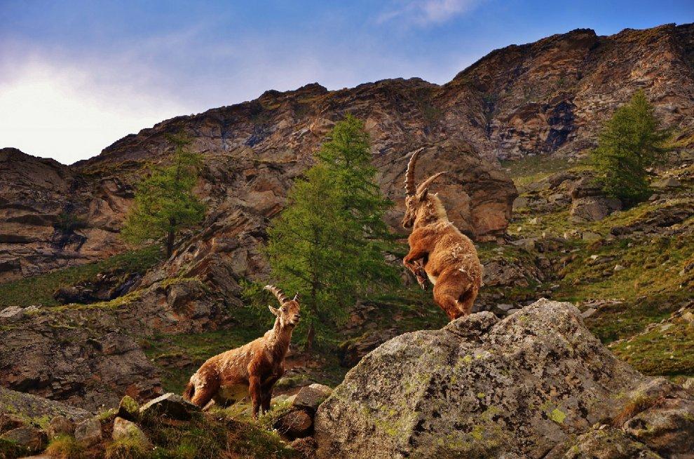 Obiettivo Terra: torna il contest fotografico per raccontare la natura