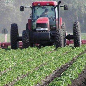 Lavoro, i giovani scoprono l'agricoltura: in arrivo 160 milioni