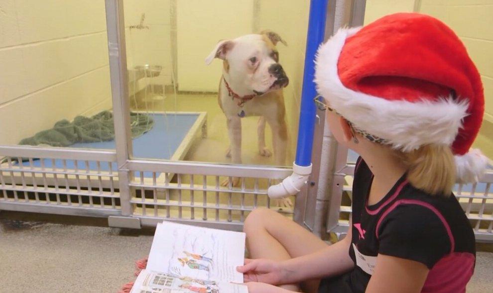 Stati Uniti, i bimbi leggono favole ai cani abbandonati