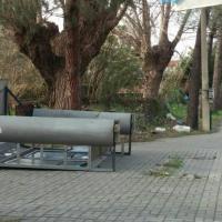 Maltempo, un morto in Calabria: alberi, tetti e statue travolte dal vento