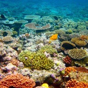 Sos coralli: El Nino sbiancherà la Grande barriera australiana
