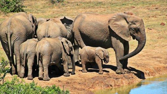 """""""Sos elefanti"""" nella Giornata della Natura 2016"""
