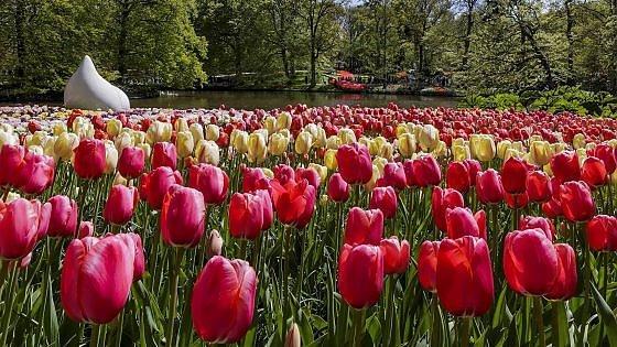 Olanda, è già primavera. Da scoprire al Keukenhof