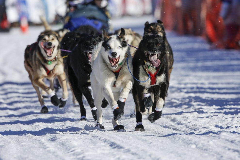Alaska, al via la corsa con i cani da slitta: ma quest'anno c'è poca neve