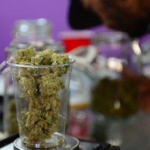 """Cannabis, la Consulta: """"La coltivazione per uso personale resta reato"""""""