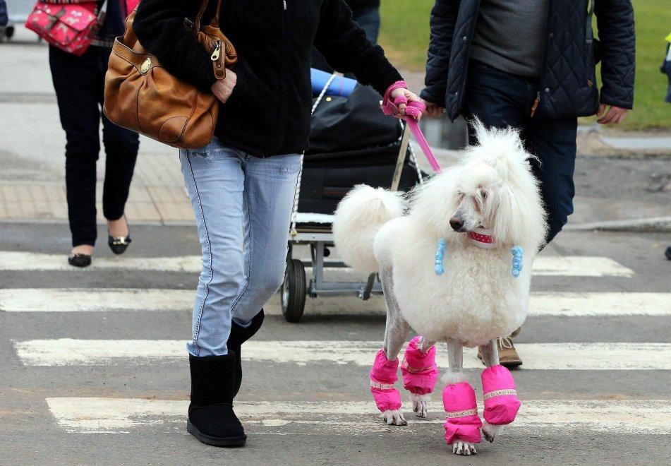 Torna il Crufts Dog Show, la più grande mostra canina del mondo