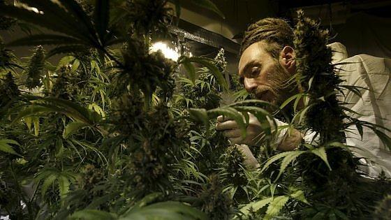Meno tasse con la cannabis legale: un affare da 44 miliardi di dollari
