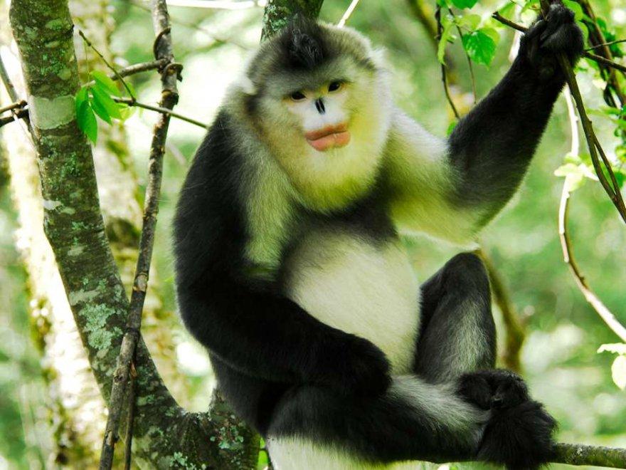 Il Rinopiteco Con Il Rossetto E Altri Primati La Seduzione Passa