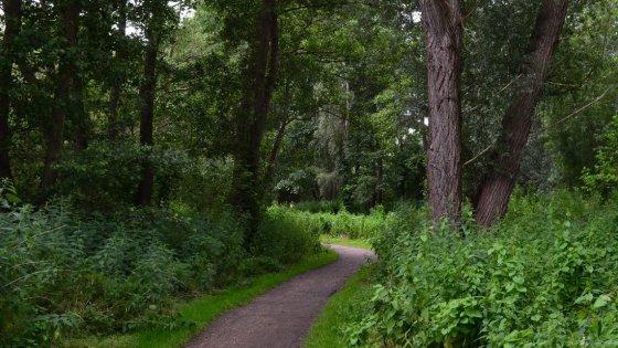 Gli alberi per l'acqua: senza foreste avremmo più sete