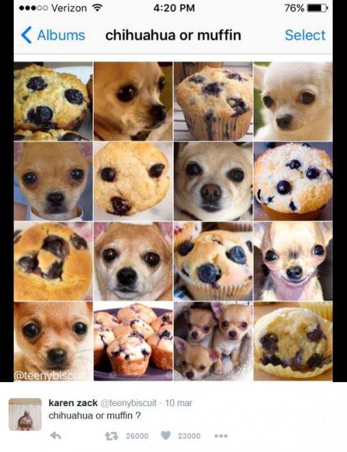 È un muffin o un chihuahua? Le incredibili somiglianze tra animali e cibo
