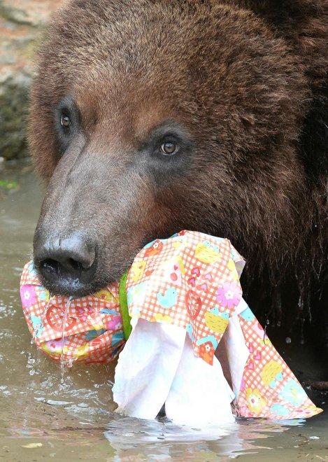 E' Pasqua anche allo zoo: uova speciali per orsi, leoni e lemuri