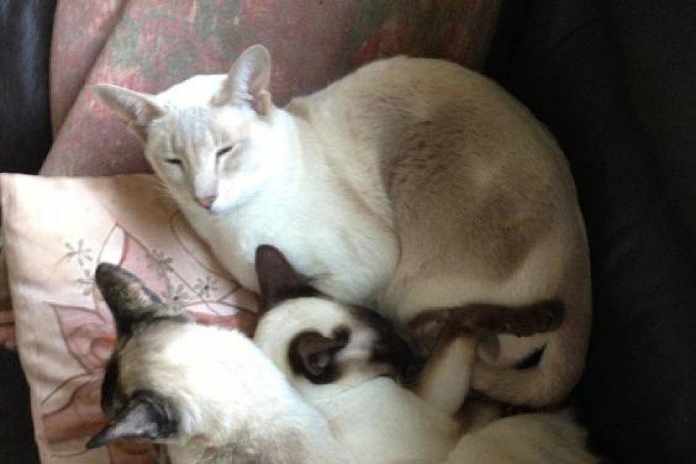 Gb, gatto sopravvive otto giorni nella scatola inviata via posta per errore