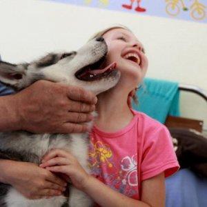 Conigli, gatti e asinelli fanno abbassare la pressione