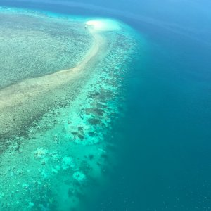 Sbiancamento record per la grande barriera corallina