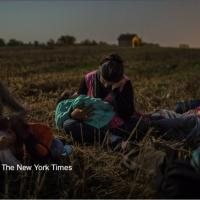 Pulitzer 2016 a Reuters e New York Times per foto sui migranti