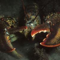 Dallo scoiattolo alle alghe: le specie aliene che fanno paura