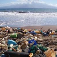 Oceani, come viaggia ''veloce'' l'inquinamento