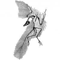 Dallo struzzo al colibrì: il mondo degli uccelli